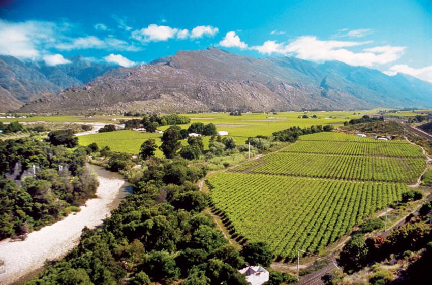 Αμπελώνες στην εύφορη περιοχή του Stellenbosch.