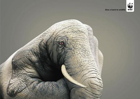 wildlife hand