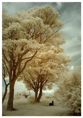 Infrared Photograph found at DeviantArt